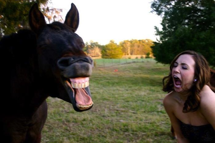 horses make facial expressions like humans