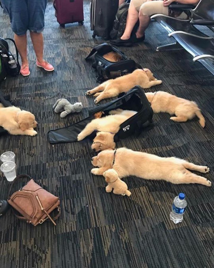 spilling dogs on the carpet airport