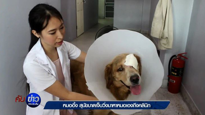 dog takes himself to the vet for treatment