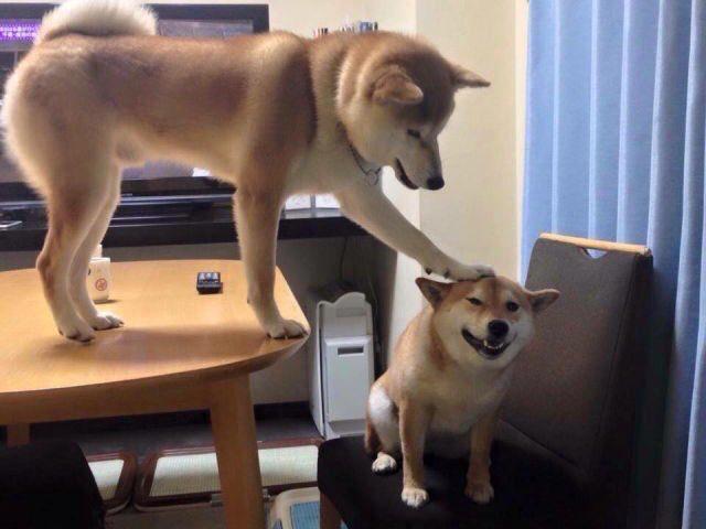 dog pets dog