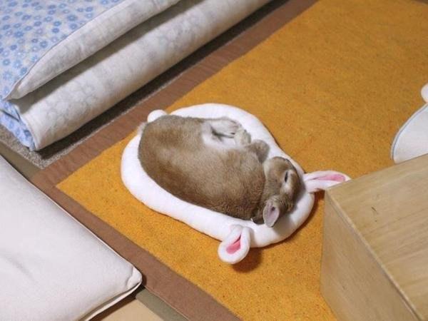 bunny in a bunny bed
