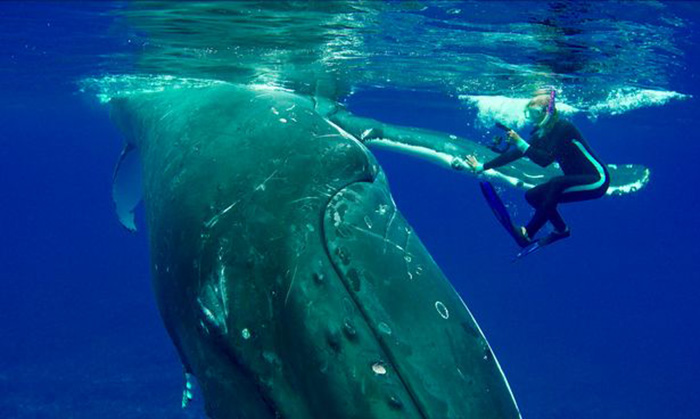 whale protects diver from shark