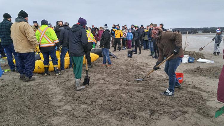 people rescue beached whale Nova Scotia