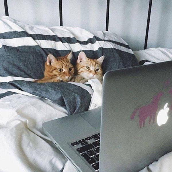 petflix and chill