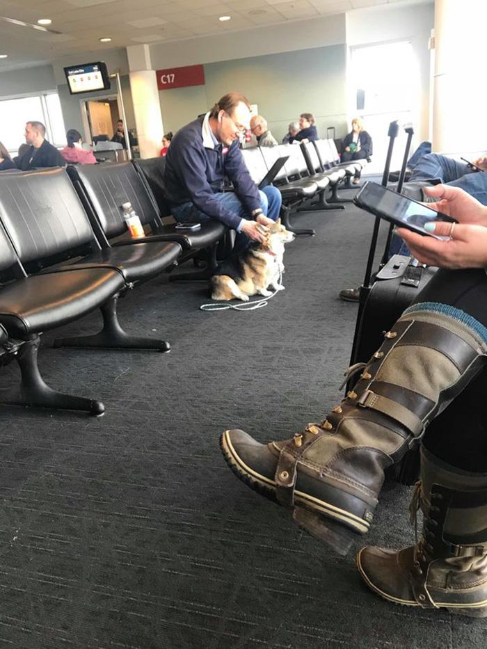 service dog comforts stranger