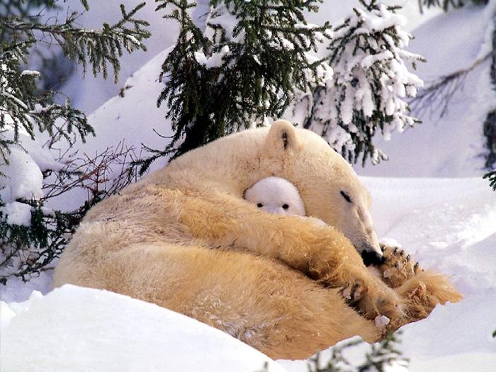 keeping her cub warm
