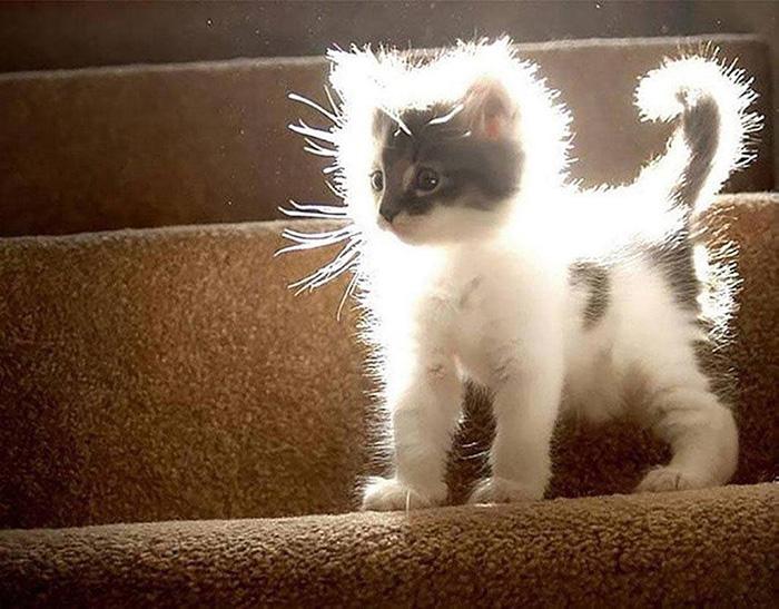 fluffy kitten in sunlight