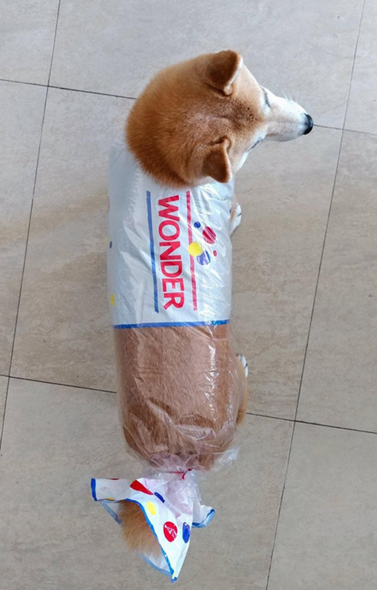 pure bread dog wonder