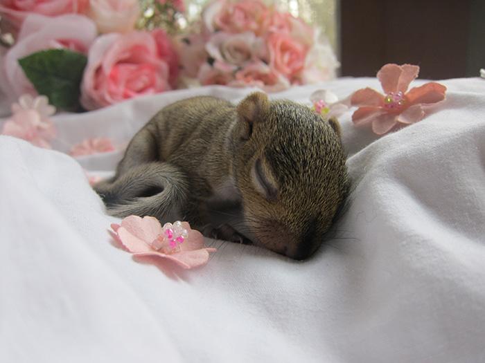 newborn photo shoot of squirrel rescue