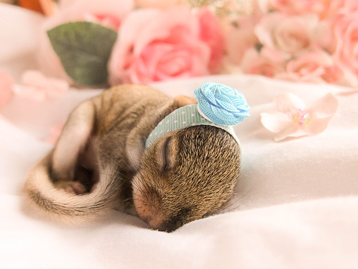 newborn photo shoot of squirrel rescue