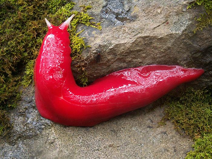 pink love slug