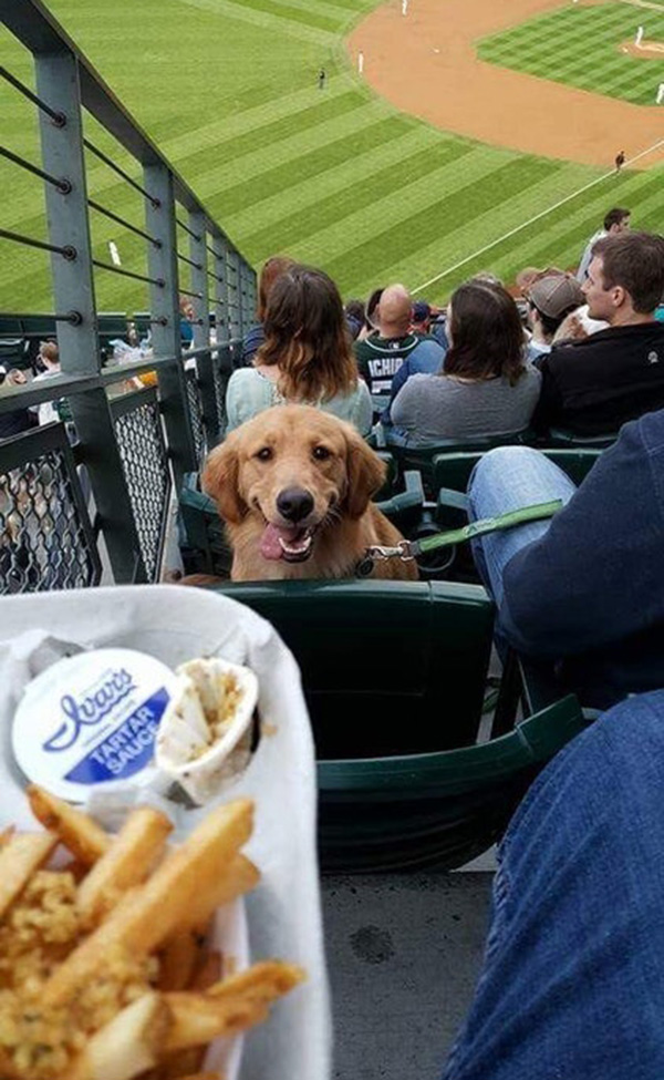 can I have some dog at baseball game