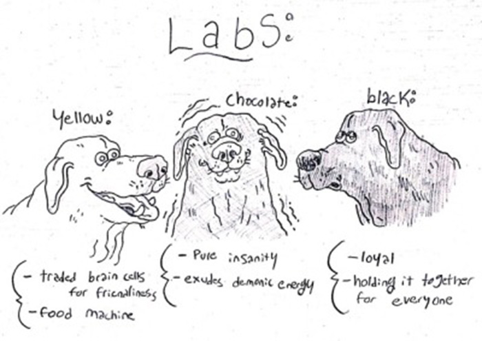 funny guide to dog breeds