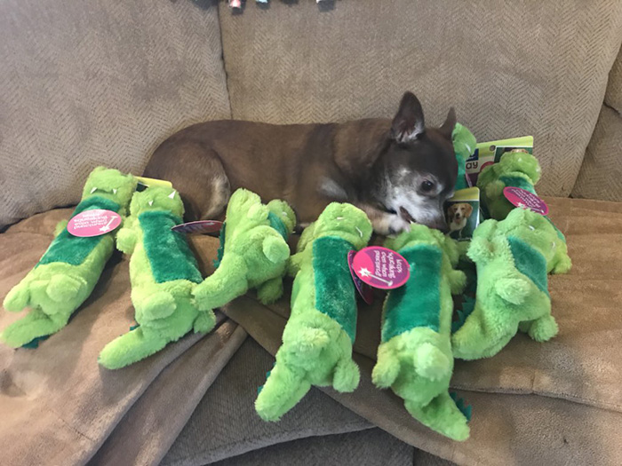 petsmart employee finds discontinued dog toy