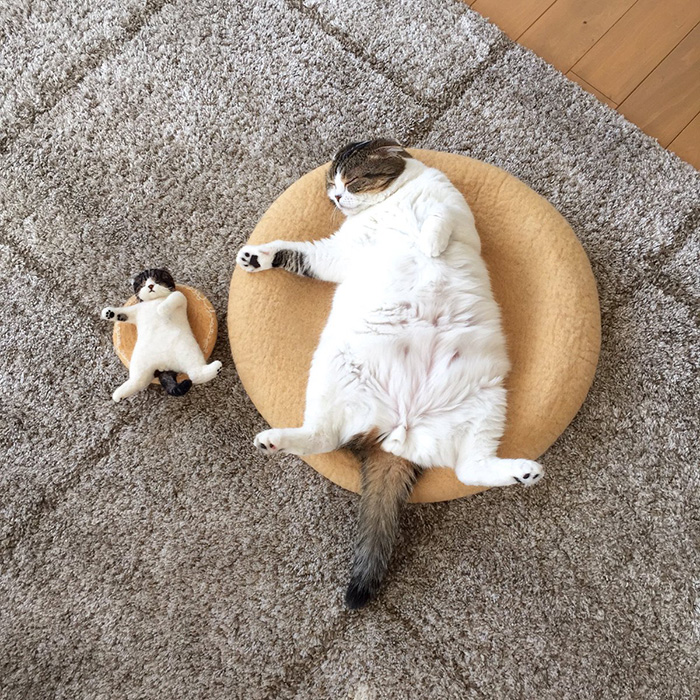 cat naps with toy cat lookalike