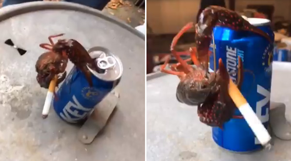Hilarious Video Of Crawfish Smoking A Cigarette And ...
