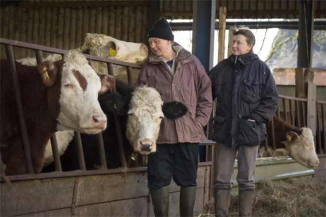 farmer refused to slaughter cows good news