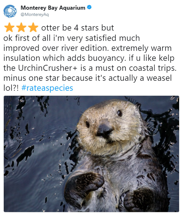 rate a species amazon funny reviews animals