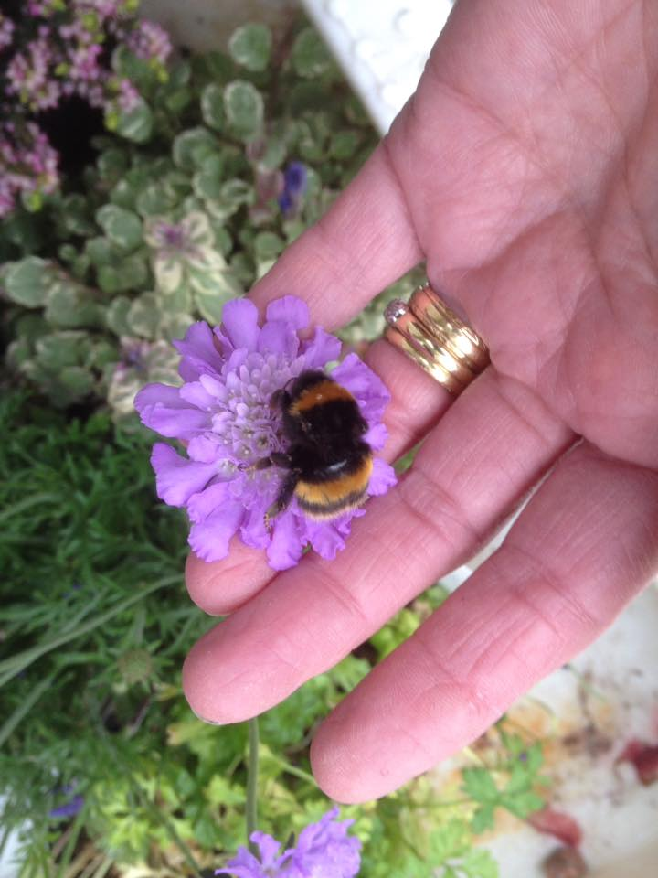 woman pet bumble bee