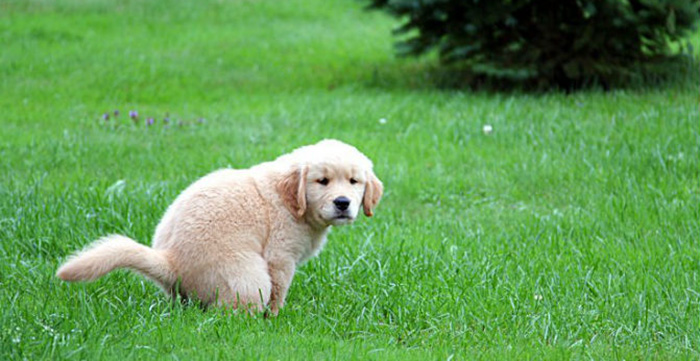 why animals can poop without wiping but not humans
