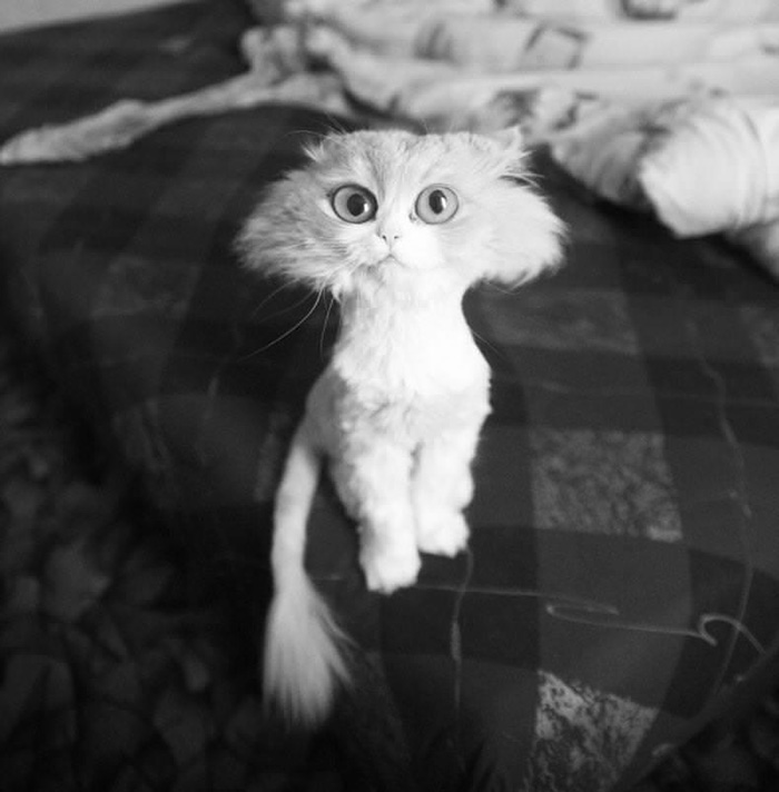 cat gets shave and looks like cartoon cat
