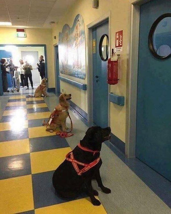 dogs waiting outside children hospital rooms