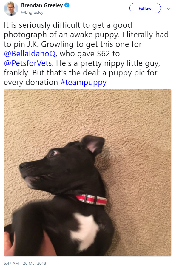 clever daughter gets puppy and raises money for shelter