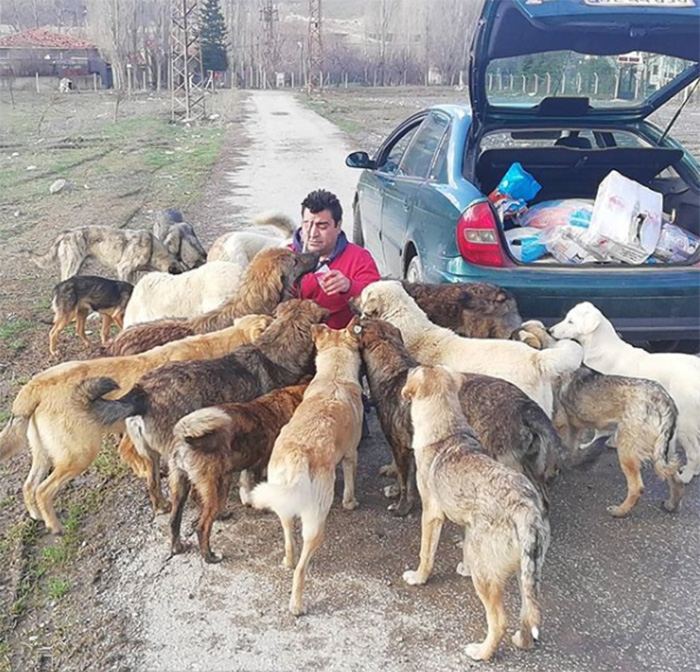 man feeds stray dogs and cats in turkey voice of the streets