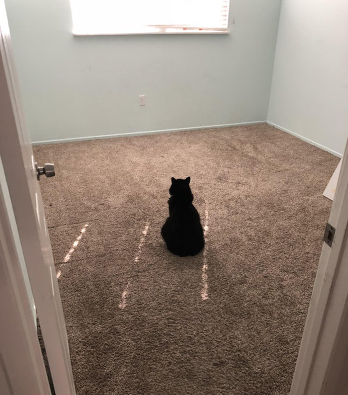 cat misses roommate