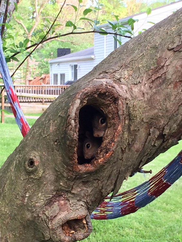 squirrel family in trees