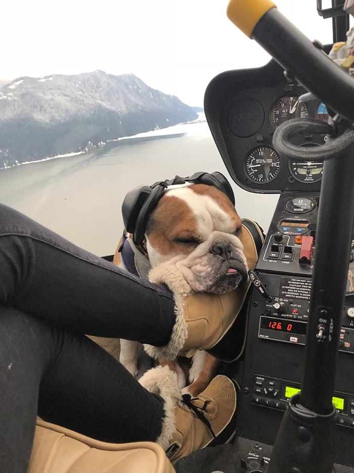 copilot dog naps