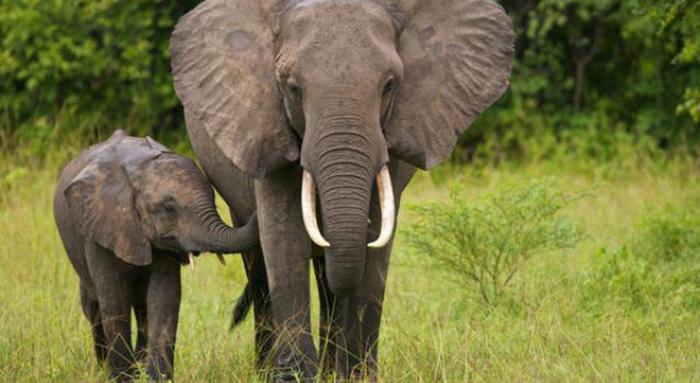 Britain bans ivory trade