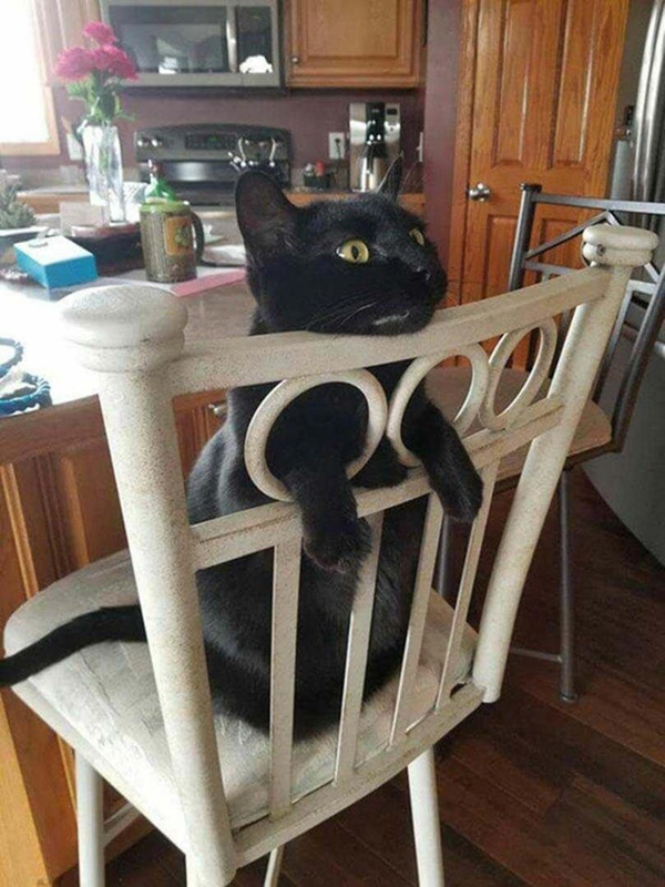 cat using chair holes