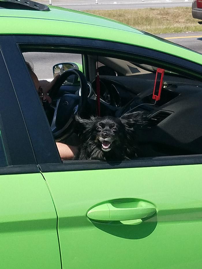 dog loves car rides