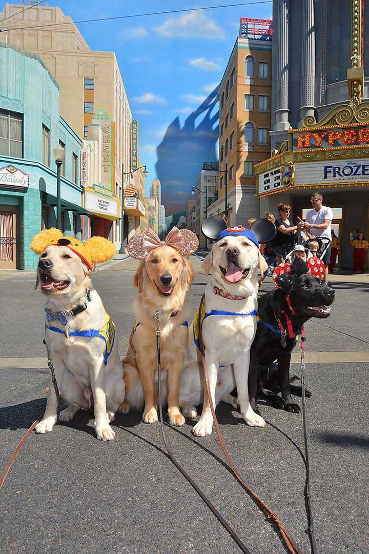 service dogs visit disneyland