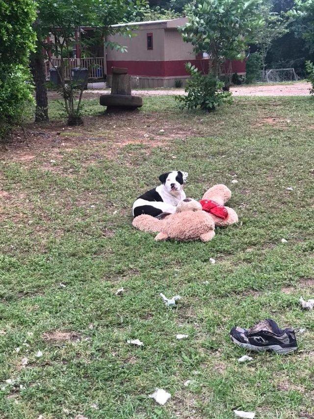abandoned dog teddy bear rescued