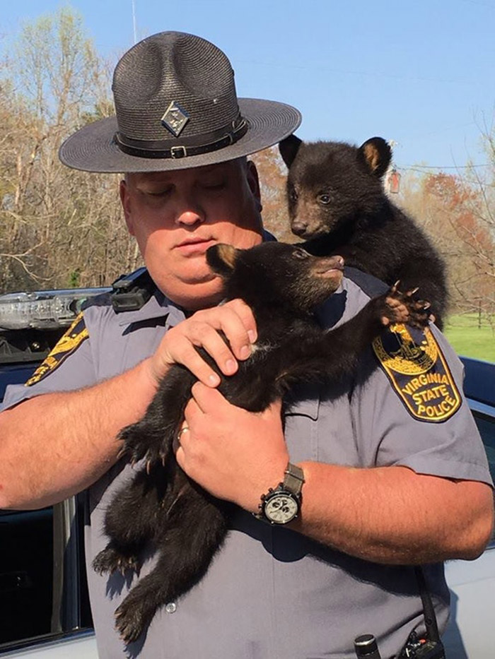 trooper rescues bear cubs
