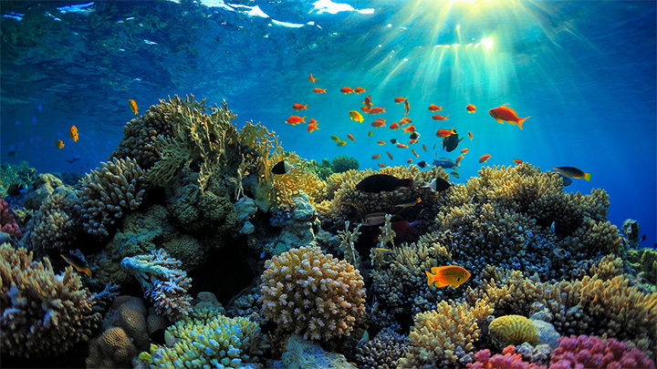 australia 500 million great barrier reef