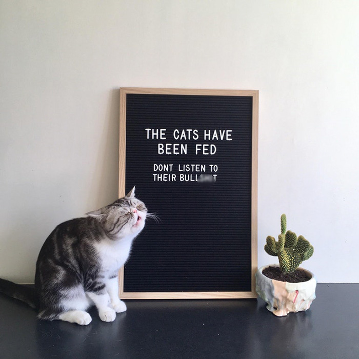 cats have been fed sign