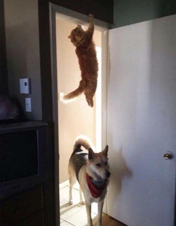 assassin animals