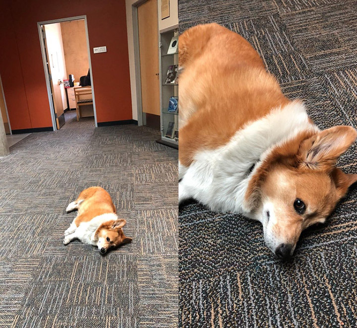 office dog is having a stressful day