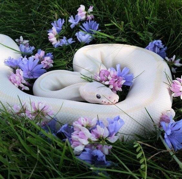 prettiest snake ever seen