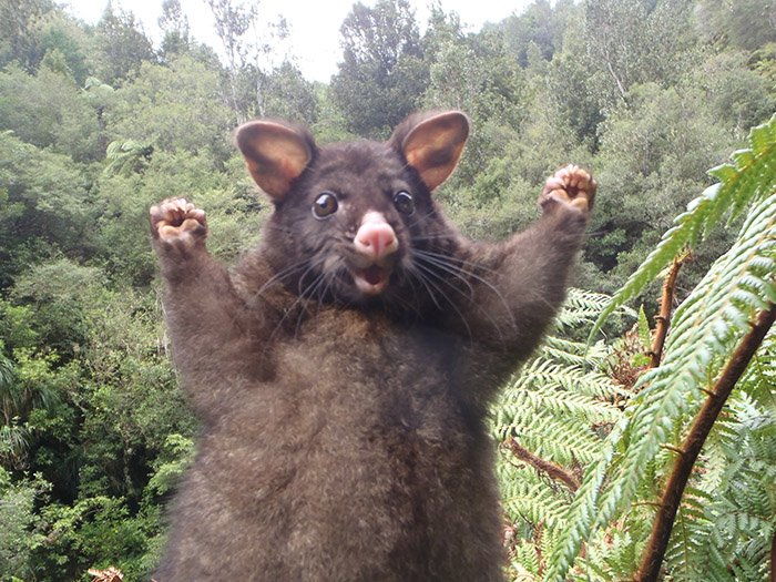 positive possum