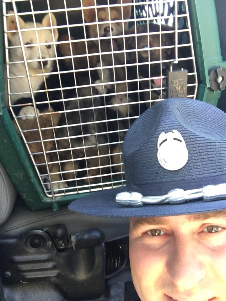 police officer saves puppies in hot car