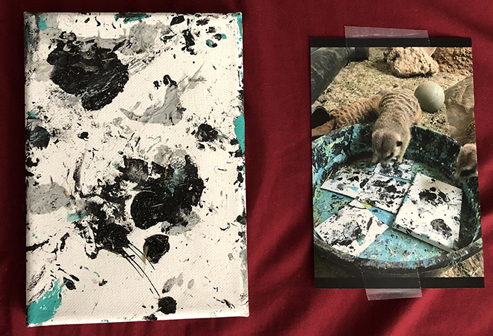 zoo sells paintings made by the animals