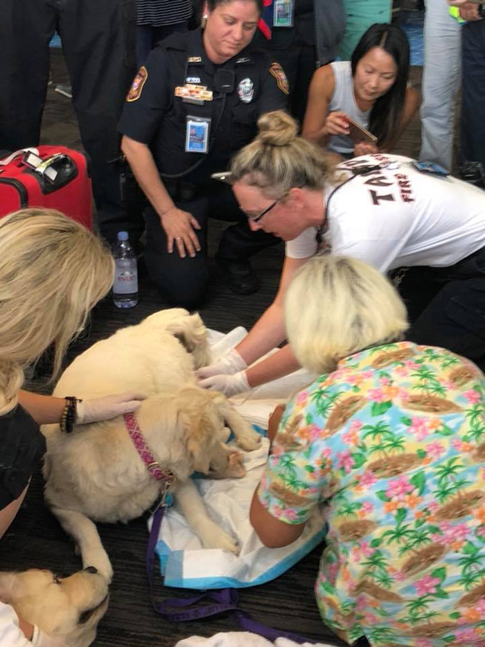 service dog goes into labor at airport