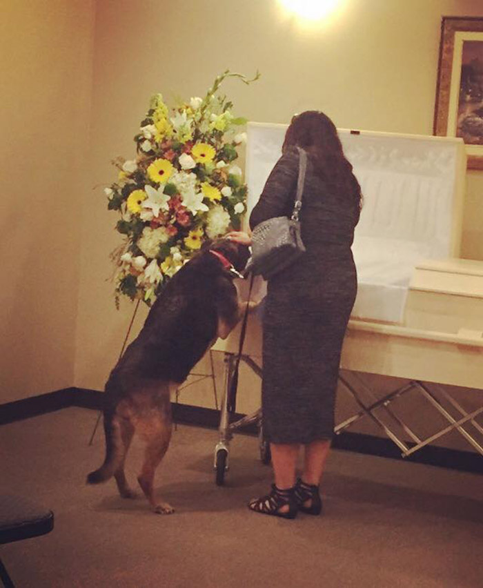 dog attends funeral final goodbye to best friend