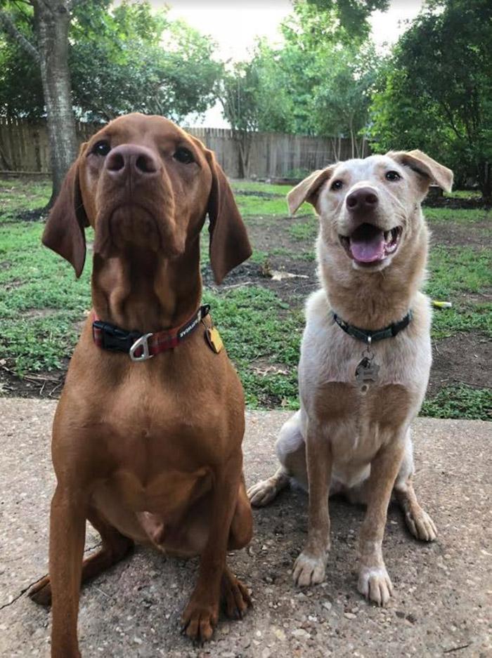 dog door in fence for best friends
