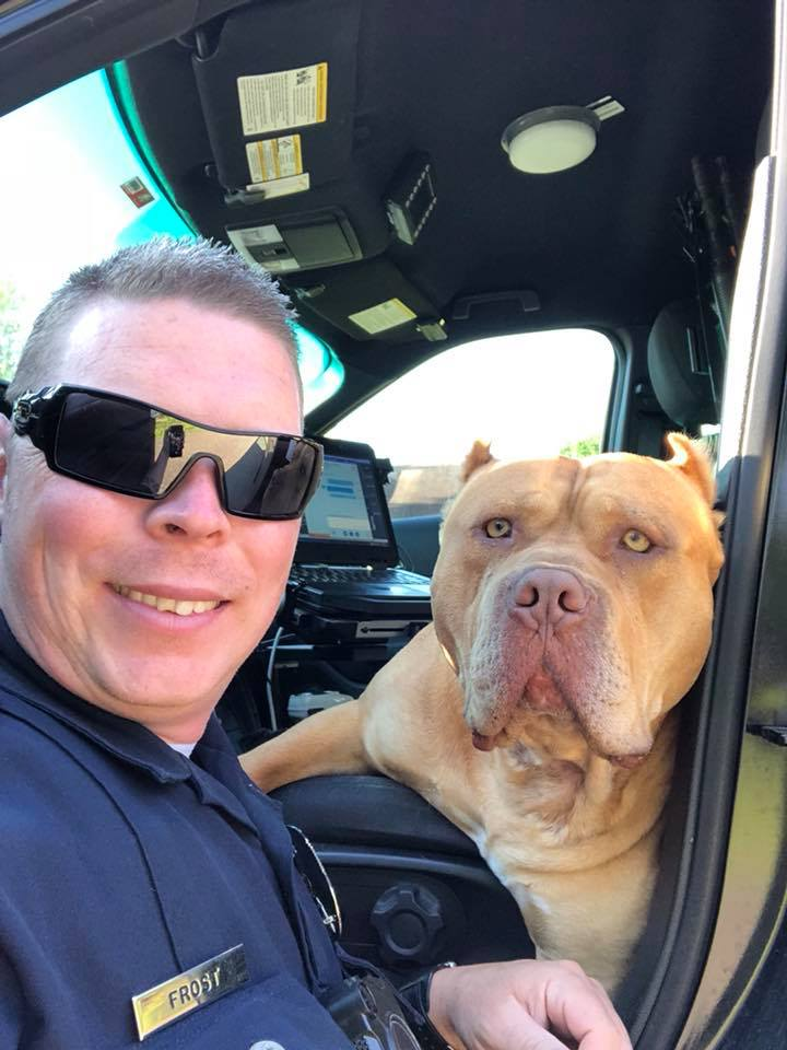 cop rescues pit bull