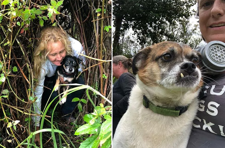 missing dogs found stuck near lava hawaii